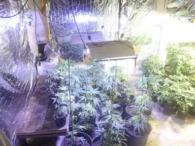 PHOTO: Marion County Sheriffs Office posted this photo on their Facebook photos page of marijuana plants they found at a home in Florida.