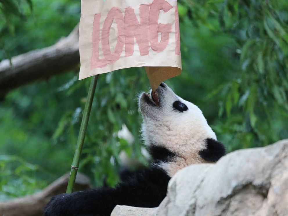 PHOTO: Giant panda Bao Bao celebrates her first birthday at the Smithsonians National Zoo, Aug. 23, 2014.