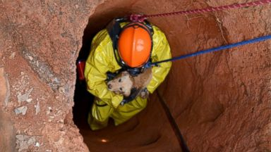 PHOTO: The Cherokee County Fire Department in Georgia rescued a yellow Labrador puppy from a 75-foot well on July 5, 2015.