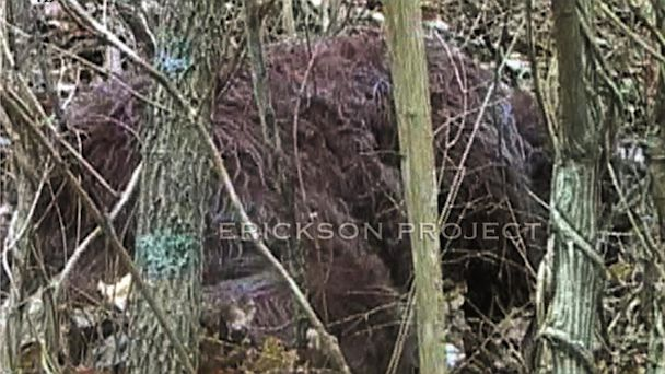 HT sasquatch nt 131002 16x9 608 Instant Index: Researchers Claim DNA Evidence of Big Foot