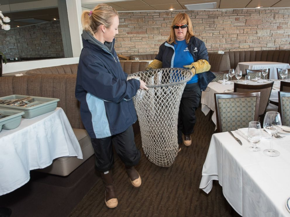 PHOTO: Mary Kate Foster, left, and Jody Westberg of SeaWorlds Rescue Team come to the aid of a female California sea lion pup that was found stranded in the dining room of the iconic Marine Room restaurant in La Jolla, California on Feb. 4, 2016.