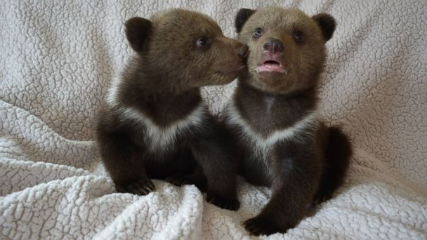 HT shalom3 mar 140326 16x9 608 A Peek Inside the Life of Raising Bear Cubs