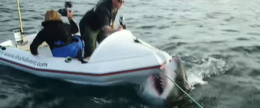 "PHOTO: A great white shark attacked a dinghy occupied by two film crew members during filming for ""Lair of the Megashark"" in 2014."