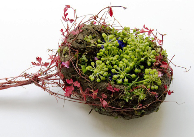 HT spleen ml 131030 wblog Wild Plant Arrangements Turn Human