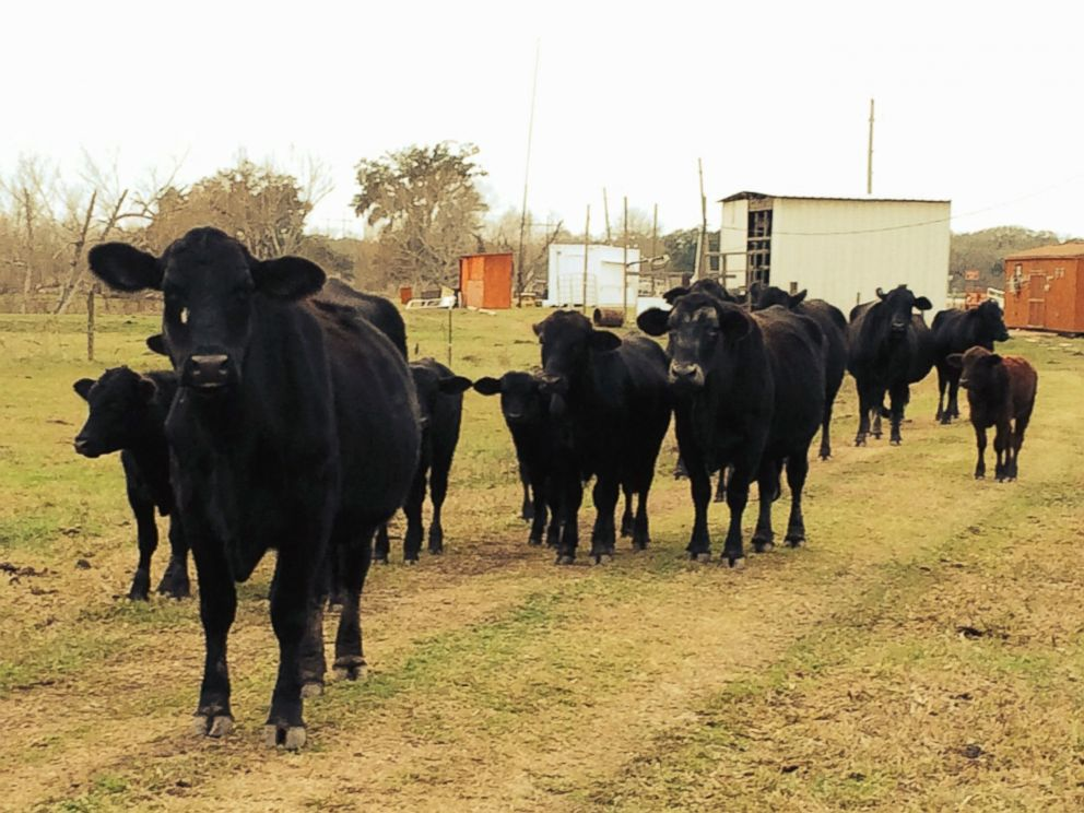 PHOTO: Part of the herd at Rowdy Girl Sanctuary.