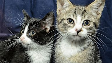 PHOTO: The CDC is warning parents and children about parasites carried by some cats that can be dangerous to humans.