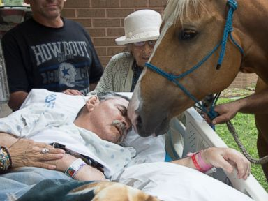 Sick Veteran Says Farewell to His Beloved Horses One Last Time