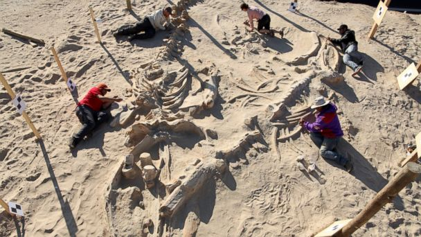 HT whale graveyard fossil dig jef 140226 16x9 608 Mystery of Whale Graveyard Solved