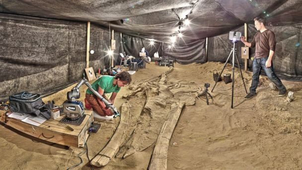 HT whale graveyard fossil tent jef 140226 16x9 608 Mystery of Whale Graveyard Solved
