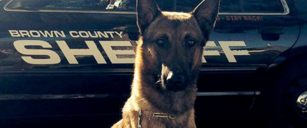 PHOTO: Wix, a K-9 unit dog for Brown County Sheriffs Department, is seen in this undated photo.