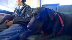 PHOTO: A dog, named Eclipse, takes the bus to a dog park in Seattle