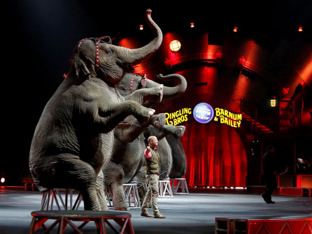 PHOTO: Elephants perform during Ringling Bros and Barnum & Bailey Circus Circus Extreme show at the Mohegan Sun Arena at Casey Plaza in Wilkes-Barre, Pennsylvania, April 30, 2016.