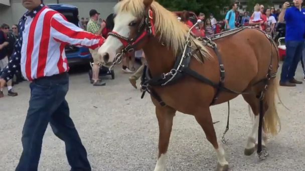 PHOTO: Three people were injured in Elm Grove, Wisconsin after show ponies broke loose from the Memorial Day parade.