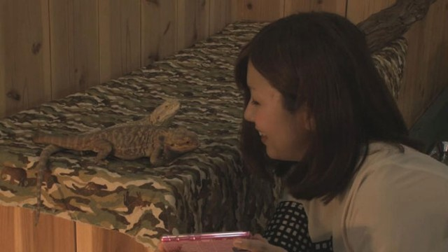 Video: Cuddling Up at Tokyos Exotic Animal Cafes