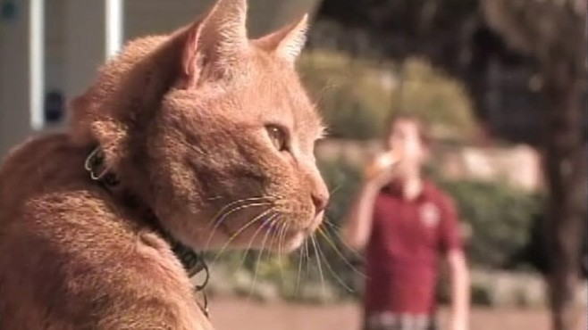 anti smoking commercial cat pee