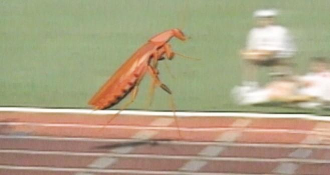 Cockroach Running Race: Bug Olympics Video - ABC News