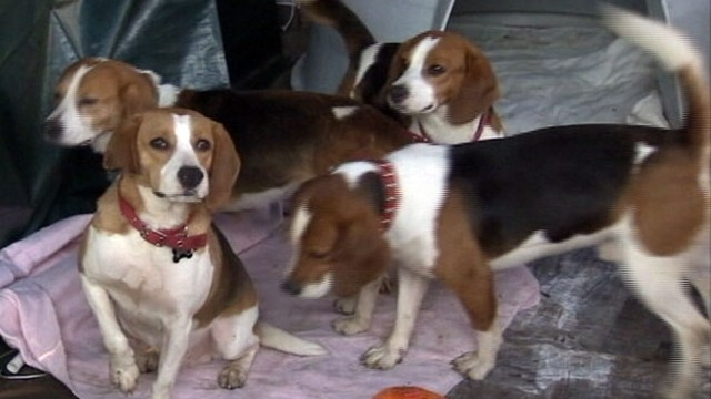Pets for Adoption at Seattle Beagle Rescue, in ... - Petfinder
