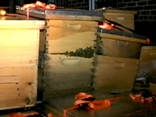 3M Bees Seized From NYC Home