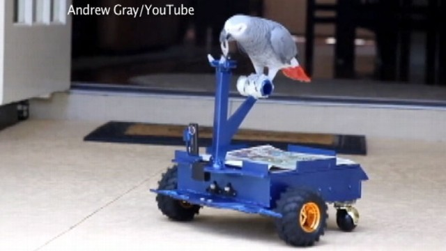 "VIDEO: University of Florida student Andrew Gray created the ""bird buggy"" to quiet down pet bird."