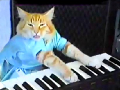 VIDEO: Fatso the cat plays piano.