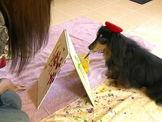 Blind Dachshund Paints, Saves Fellow Dogs