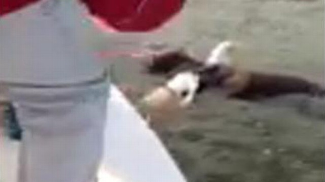 VIDEO: Alabama family was able to unhook the bird of prey after it went after their fish bait.