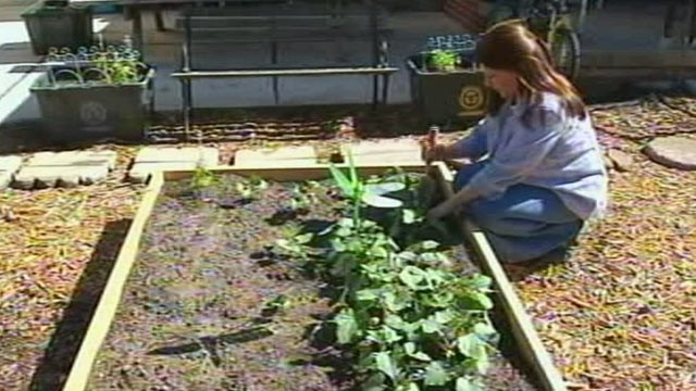PHOTO: When Julie Bass' front yard was torn up after replacing a sewer line she put in a vegetable garden.