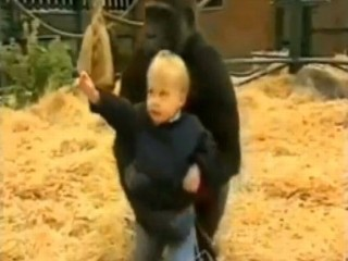 Video: Toddler Plays With Gorilla