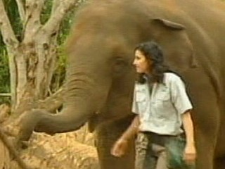 Zoo Keeper Stable After Elephant Attack