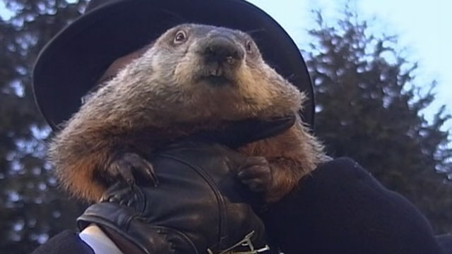 """PHOTO:An early spring is on the way, according to groundhog """"Punxsutawney Phil."""" When the Pennsylvania groundhog emerged from his dwelling at Gobbler's Knob on Feb 2, 2013, he did not see his shadow."""