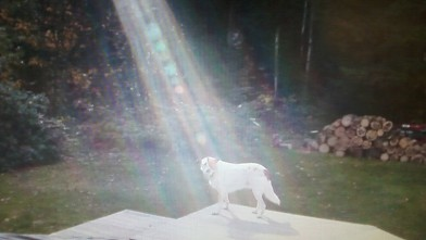 PHOTO: An unlikely beam of light illuminates a Hero, a military dog on an overcast day.