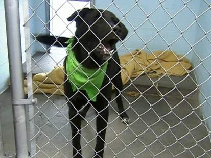 Video: Are big black dogs discriminated against?