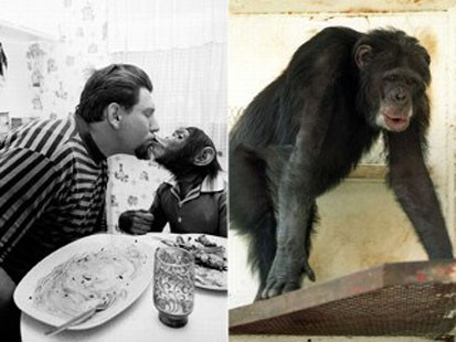 owner and chimpanzee