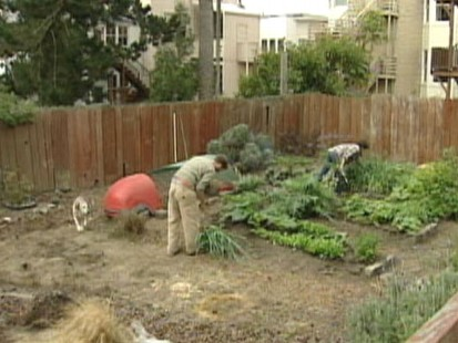 Video: Calif. company designs and plants gardens in your backyard.