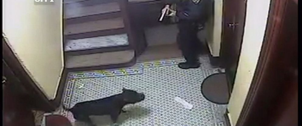 PHOTO: Surveillance video shows a New York police officer drawing his gun on a dog in an apartment building in the Bronx borough of New York.