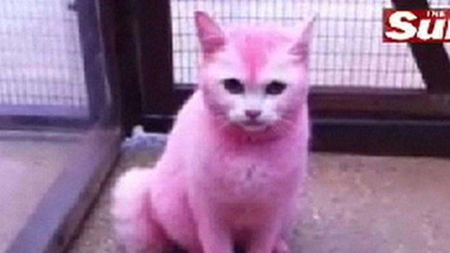 Pink Cat Sex Porn Images