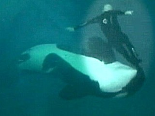 Sea World Whale Attack Video Released