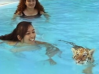 Swim With a Tiger Cub at Private Zoo