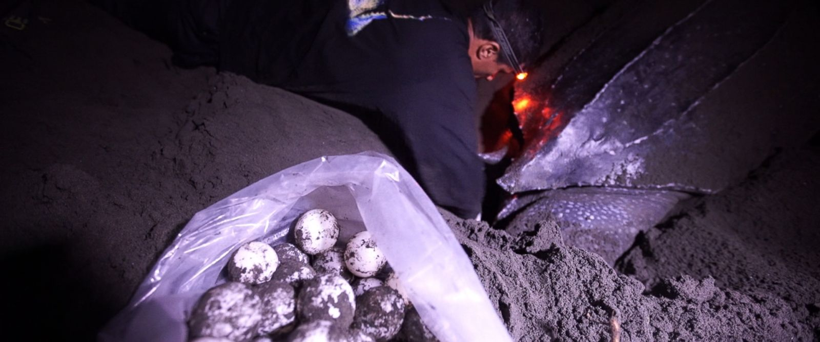 Conservationists try to collect leatherback turtle eggs on Moin Beach in Costa Rica before the poachers do so they can transport them to a hatchery.