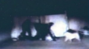 VIDEO: An Ohio cop misfires his stun gun and is bitten by a dog during an arrest.