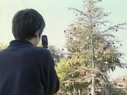 Video: Sad looking Christmas tree on display in Concord, California.