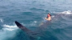 PHOTO: Chris Kreis, 19, spotted and rode a whale shark in the Gulf of Mexico while boating with his family.