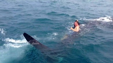 Chris Kreis, 19, spotted and rode a whale shark in the Gulf of Mexico while boating with his family.