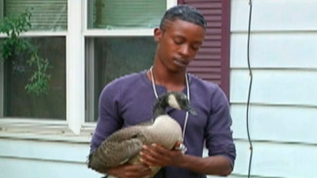 PHOTO: Jarrell Johson, 26, of Champaign, Ill., said a goose showed up on his doorstep on July 28, 2012 and he's been caring for it ever since.