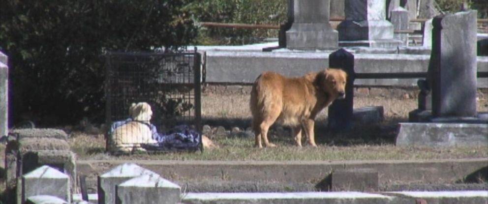 PHOTO: Hunter Cone found this stray dog refused to leave the graveyard where its puppy was buried.