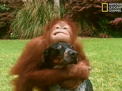 VIDEO: An orangutan and a dog