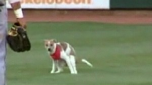 Video: Puppy goes number two on minor league baseball field.