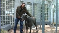 VIDEO: Giant George is named the worlds tallest dog.