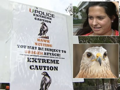Video: College student attack by a hawk.