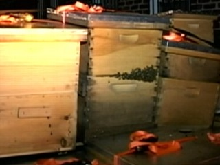 Watch: 3 Million Bees Seized in New York City